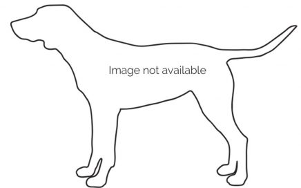 image of Foxhound