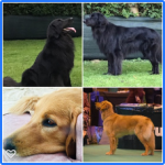 image of dogs used for breeding
