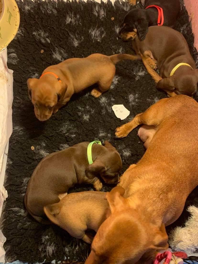 Mum of  puppies